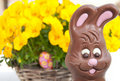 Easter bunny in front of flowers Stock Photos
