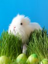 Easter bunny is in the grass Royalty Free Stock Image