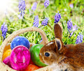 Easter bunny hides eggs in basket Stock Images