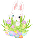 Easter bunny pretty flowers and eggs Stock Photos