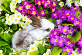 Easter bunny between primroses small Royalty Free Stock Images