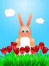 Easter Bunny Rabbit on Field of Tulips Flowers Royalty Free Stock Photography