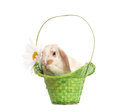 Easter Bunny sitting in basket Stock Photos
