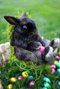 Easter bunny sitting hin chair with colorful eggs Royalty Free Stock Photography