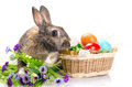Easter bunny sitting near basket Stock Images