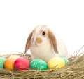 Easter Bunny is sitting near the colorful eggs Stock Image