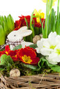 Easter bunny with spring flowers Stock Images