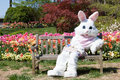 Easter bunny with tulips Royalty Free Stock Photo