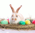 Easter bunny in velour grasses Stock Photo