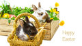 Easter card with easter bunny bunnies Royalty Free Stock Photography