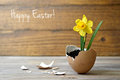 Easter card spring flowers in eggshell on wooden table Stock Photos
