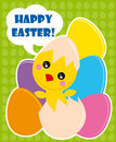 Easter chick Royalty Free Stock Photography