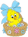Easter chick little yellow chicken sitting in a basket with flowers Royalty Free Stock Photography