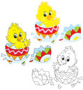 Easter chick little yellow peeking out of an egg Royalty Free Stock Photos