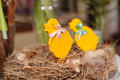 Easter chicken decorative yellow wooden chickens for holiday Royalty Free Stock Photo