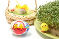 Easter chicken and painted egg with green watercress closeup of funny chickens colorful fresh cress on cotton pad decoration Royalty Free Stock Photos