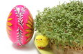 Easter chicken and painted egg with watercress closeup of funny colorful fresh green cuckoo flower on cotton pad Stock Image