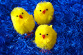Easter chickens Royalty Free Stock Images