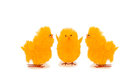 Easter chickens on white background three yelling at each other Royalty Free Stock Photos