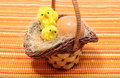 Easter chickens in wicker basket and fresh egg closeup of decoration chicken or the Stock Photos
