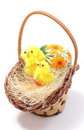 Easter chickens in wicker basket and painted egg closeup of colorful decoration isolated on white background Royalty Free Stock Images
