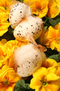 Easter colored eggs and yellow flowers Stock Images