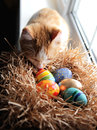 Easter colorful eggs in the nest and a ginger cat.