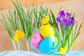 Easter composition with crocuses and colored eggs in a glass vase tiny chicks Royalty Free Stock Photos