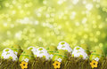 Easter concept decoration with eggs in the grass Stock Photography