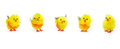 Easter cute yellow chicks for seasonal decoration Royalty Free Stock Images