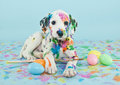 Easter dalmatain puppy a funny little dalmatian that looks like he just painted some eggs Royalty Free Stock Images