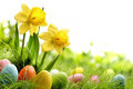 Easter day eggs on meadow with daffodil flower Royalty Free Stock Images