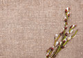 Easter decoration with catkins on sacking texture of background Royalty Free Stock Images