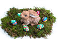 Easter decoration painted eggs and rabbit on moss with nicely brightly an hare fresh Royalty Free Stock Photo