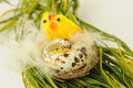 Easter decoration yellow chicken with broken egg in wicker clutch Royalty Free Stock Photo