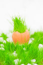 Easter egg with green grass over snow Royalty Free Stock Images