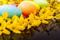 Easter egg and laburnum yellow on black reflex background Royalty Free Stock Photo