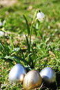 Easter egg meadow snowdrop Royalty Free Stock Images