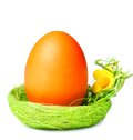 Easter egg in nest bird s over white background Stock Photos