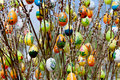 Easter egg with willow catkins Royalty Free Stock Photo