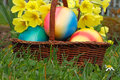 Easter eggs in a basket with flowers in a meadow Royalty Free Stock Photos
