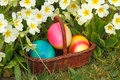 Easter eggs in a basket with flowers in a meadow Royalty Free Stock Photo
