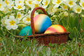 Easter eggs in a basket with flowers in a meadow Stock Photography