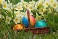 Easter eggs in a basket with flowers in a meadow Stock Images