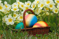 Easter eggs in a basket with flowers in a meadow Royalty Free Stock Image