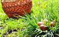 Easter eggs and basket in the grass Royalty Free Stock Image