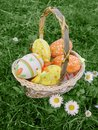 Easter eggs in basket on grass