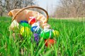 Easter eggs and basket with napkin on grass a a a solar green natural background Stock Image