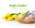 Easter eggs in the basket and yellow tulips isolated on white Royalty Free Stock Photo