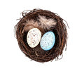 Easter eggs in birds nest Royalty Free Stock Photo